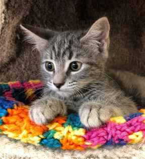 stock_humanesocietyofsedona_kittens02