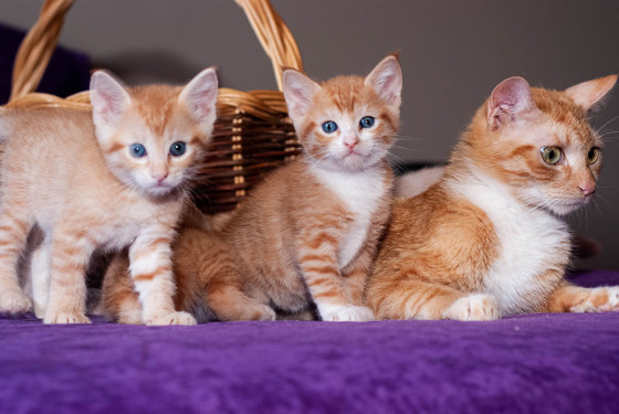 20200430_hss_kittens